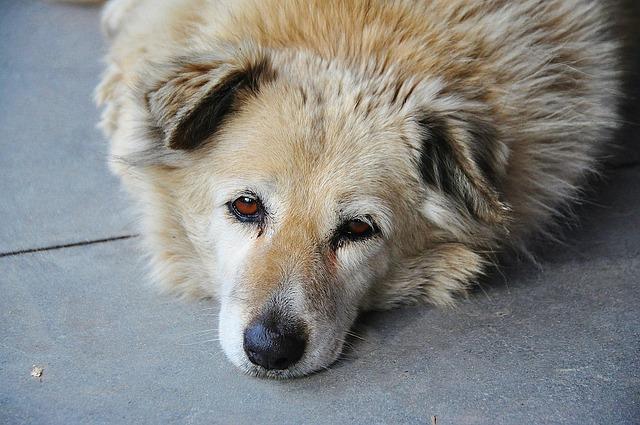 dog-606066_640
