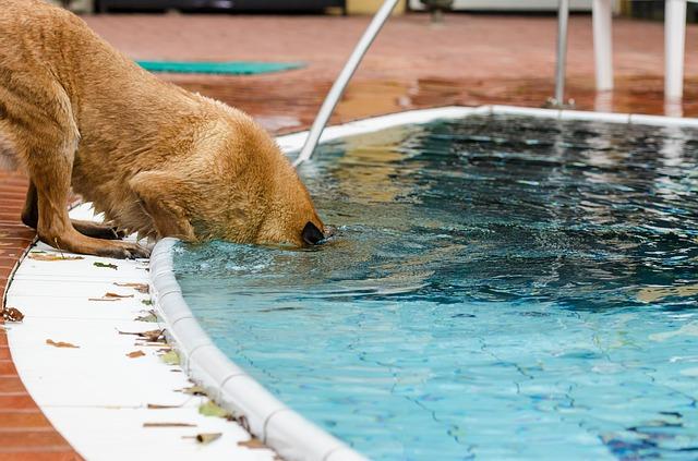pool-741340_640
